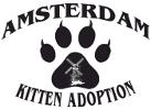 Amsterdam Kitten Adoptions